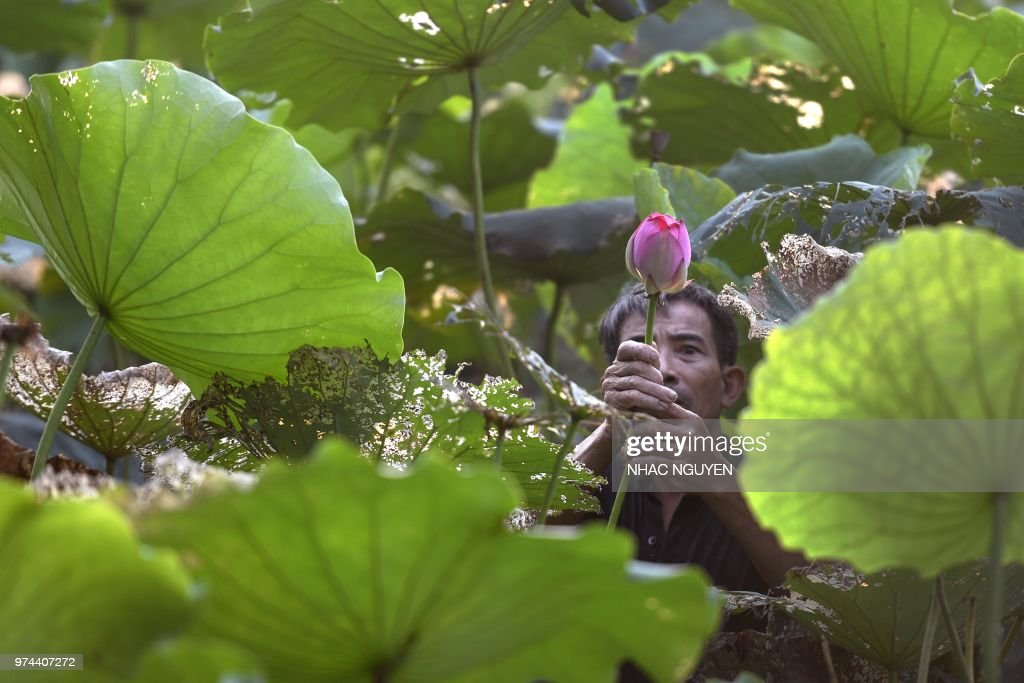 VIETNAM-LIFESTYLE : News Photo