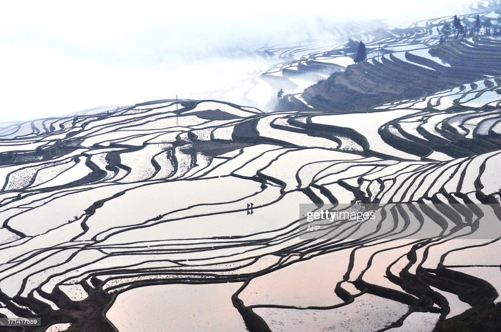 This picture taken on March 11, 2012 shows the terraced rice fields in Hani, southwest China's Yunnan province. Japan's Mount Fuji, a series of ancient terraced rice paddies China, and the desert city of Agardaz in Niger were among the cultural jewels granted World Heritage status by UNESCO at its annual meeting on June 22, 2013. CHINA