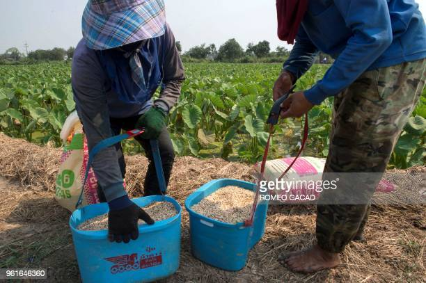 This picture taken on March 13 2018 shows Thai farmers preparing to apply fertilizer on a taro field in Suphan Buri province Thailand was ranked the...