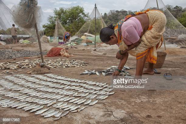 This picture taken on March 16 shows an Indian woman laying out mackerel fish to dry at a fishing harbour in Agonda village in South Goa district /...