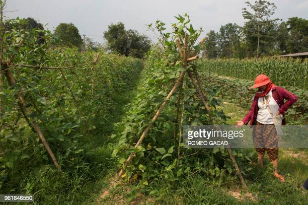 This picture taken on March 28 2018 shows a Thai farmer inspecting an organic farm in Chachoengsao province Thailand was ranked the world's 22nd...