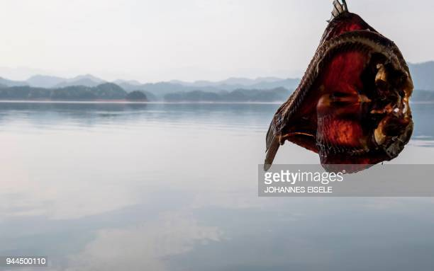 TOPSHOT This picture taken on March 29 2018 shows a fish hanging to dry on a boat at the Qiandao lake in Zhejiang province On a clear sunny morning...