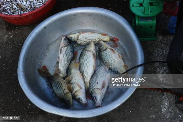 This picture taken on March 30 2015 shows live carps on sale at a village's afternoon market in Quoc Oai district on the outskirts of Hanoi Local...