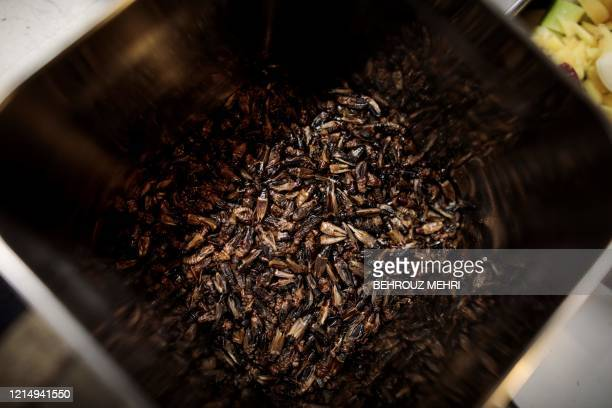This picture taken on May 13 2020 shows a pot containing dried crickets used as an ingredient as part of cricket ramen homecooking kits at a kitchen...