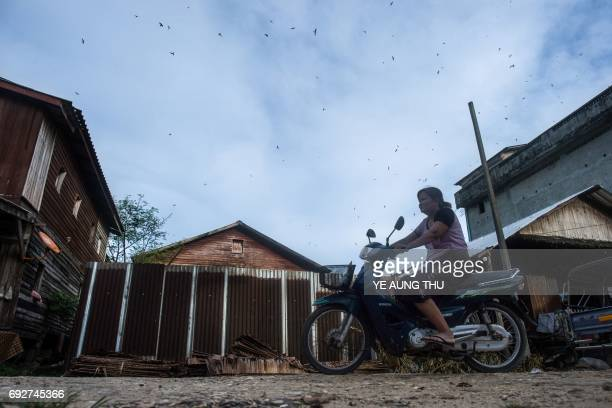 This picture taken on May 15 2017 shows a woman riding a motorcycle as swiftlets fly in Bokpyin township Tanintharyi Region in southeastern Myanmar...