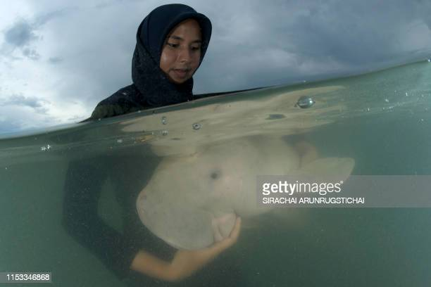 This picture taken on May 23 2019 shows Mariam the dugong as she is cared for by park officials and veterinarians from the Phuket Marine Biological...