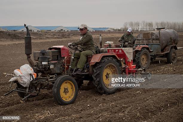 This picture taken on May 3 2016 shows farmers with tractors working in a corn field in front of a dairy farm in Gannan county Heilongjiang province...