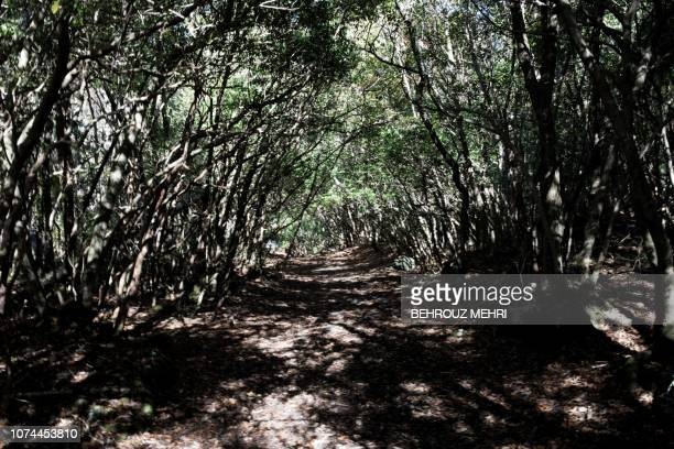 This picture taken on November 1 2018 shows a walking path in Aokigahara Forest known as Suicide Forest in Narusawa village Yamanashi prefecture...