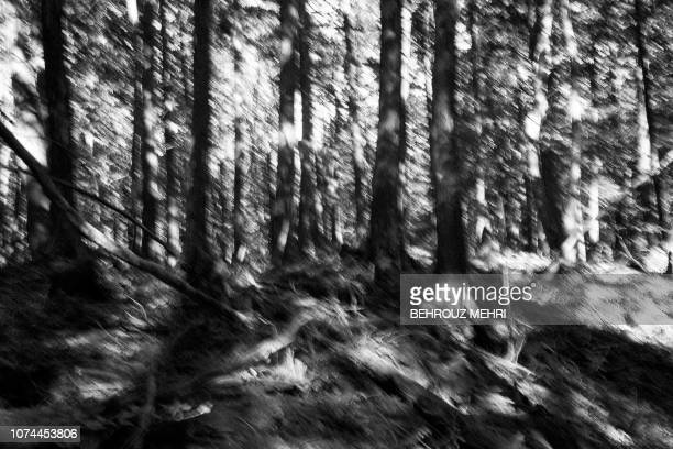 This picture taken on November 1 2018 shows trees in Aokigahara Forest known as Suicide Forest in Narusawa village Yamanashi prefecture Japanese...