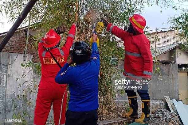 This picture taken on November 21 2019 shows fire fighters smoking a hornet nest before taking it away in Solo in an effort to reduce numbers of the...
