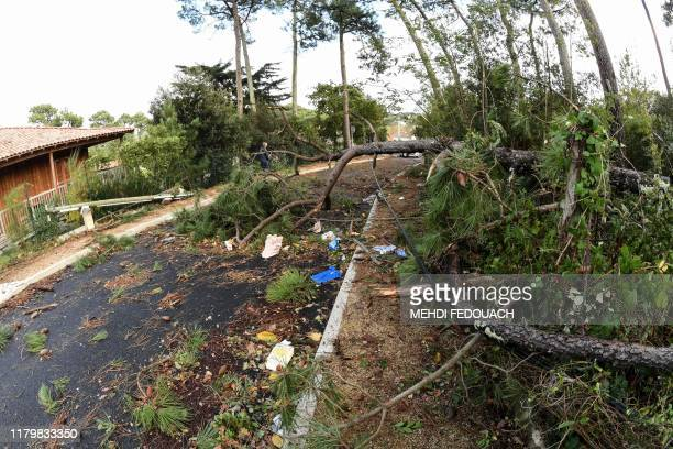 This picture taken on November 3 shows fallen trees and a fallen electric pole in a street of Lacanau, southwestern France, after the storm Amelie. -...