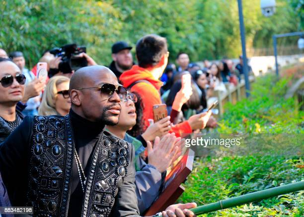 This picture taken on November 30 2017 shows US boxer Floyd Mayweather feeding pandas in an enclosure as he visits the Chengdu Research Base of Giant...