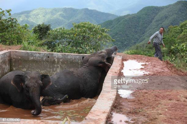 This picture taken on October 12 2016 shows two elephants and a baby elephant trapped in the reservoir after having fallen inside when drinking water...