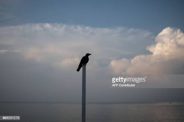 This picture taken on October 21 2017 shows a Common Raven bird perching on a fence pole of the Strait of Malacca during sunrise in Malacca / AFP...