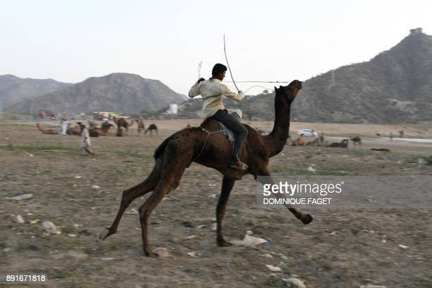This picture taken on October 25 2017 shows an Indian man riding his camel at the end of the day at the Pushkar Camel Fair in Pushkar in Rajasthan...