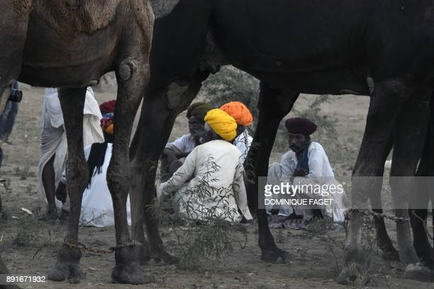 This picture taken on October 25 2017 shows Indian camel owners sitting near their livestock at the Pushkar Camel Fair in Pushkar in Rajasthan state...