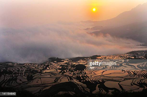 This picture taken on on March 11 2012 shows a hillslope of paddy fields in the mountainous region of Yuanyang southwest China's Yunnan province The...