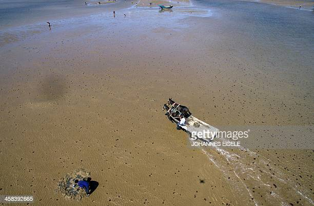 This picture taken on September 19 2016 shows an aerial view of Qin Yusheng with his mules drawn cart at the beach in Xianrendao next to Yingkou City...
