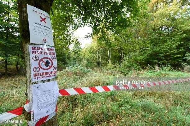 This picture taken on September 22 2018 shows a quarantine zone in Etalle Luxembourg Province as nine boars were found dead because of the incurable...