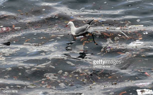 This picture taken on September 24 2018 shows a seagull amid rubbish in the waters of the Sydney Harbour