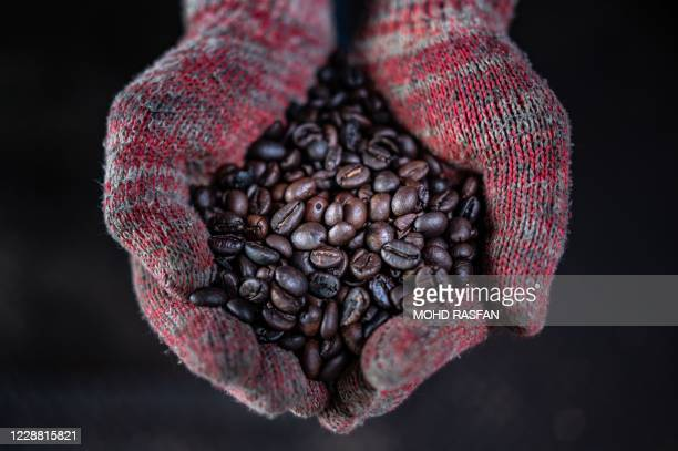 This picture taken on September 28, 2020 shows a worker showing wood fire roasted coffee beans at the Antong Coffee Factory in Taiping in the...