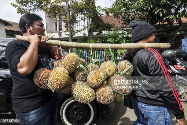 This picture was taken on February 11 2018 shows two Indonesian men carrying durian fruits during the Durian Festival locally called 'Kenduren' in...