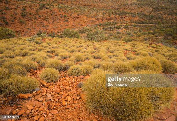 This scenic landscape of rugged ranges, rockholes, plants of Kings Canyon, Australia.