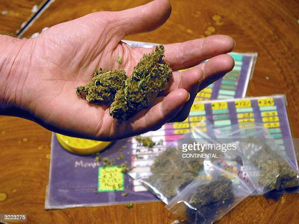 This September 2003 file picture shows a man holding cannabis at a coffee shop in Amsterdam The Netherlands' liberal policy towards socalled soft...