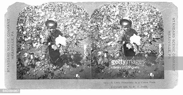 60 Top Sharecropper Pictures, Photos, & Images - Getty Images