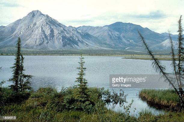 This undated photo shows the Arctic National Wildlife Refuge in Alaska The US Senate voted not to allow drilling for oil in the refuge March 19 2003...