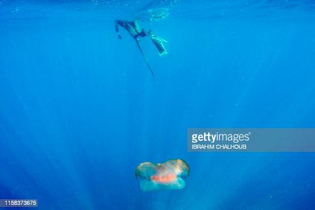 This underwater picture taken on July 29 shows a jelly fish near a spearfishing practitioner off the coast of the northern Lebanese town of Qalamun...