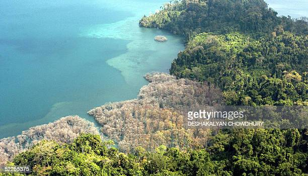 This view from the air shows coastal vegetation which died after being enveloped by salt water on Katchal Island part of the Andaman and Nicobar...