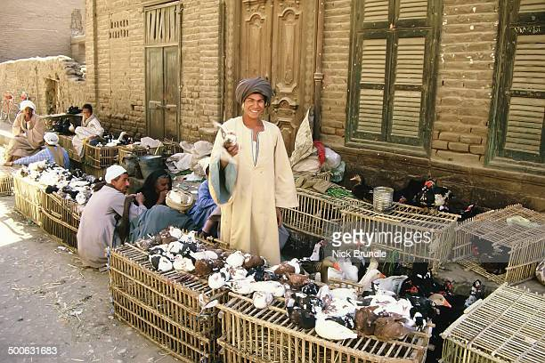 CONTENT] This was a Family selling geese and pigeons in the market at Luxor Egypt