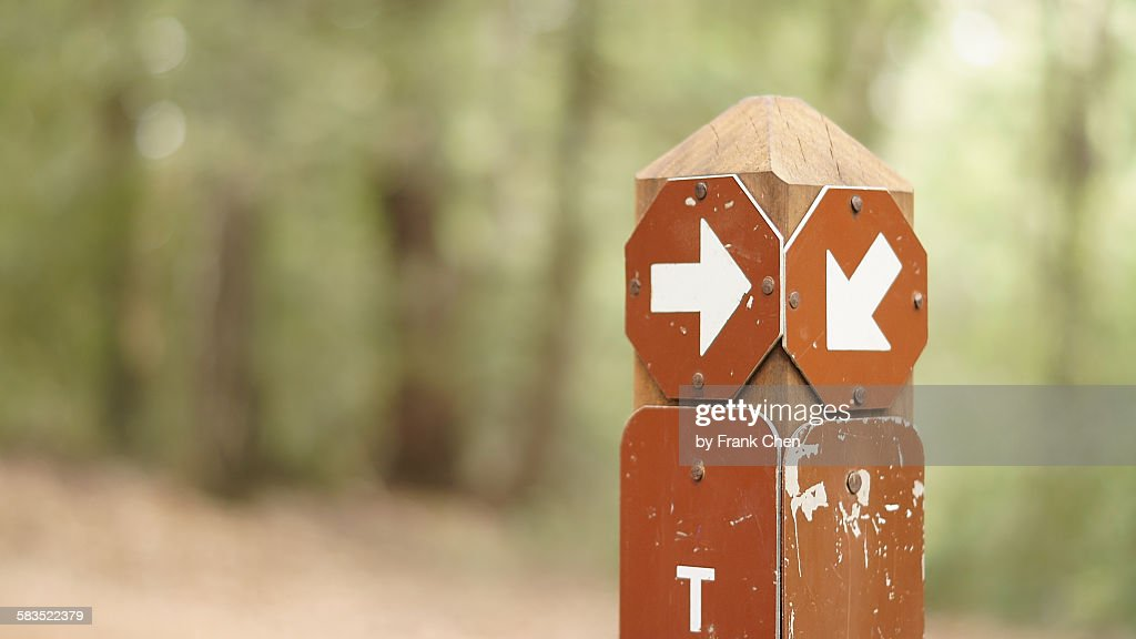 This way, that way, direction sign on forest trail : Stock Photo