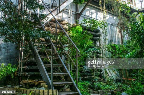 this way up - botanical garden stock pictures, royalty-free photos & images