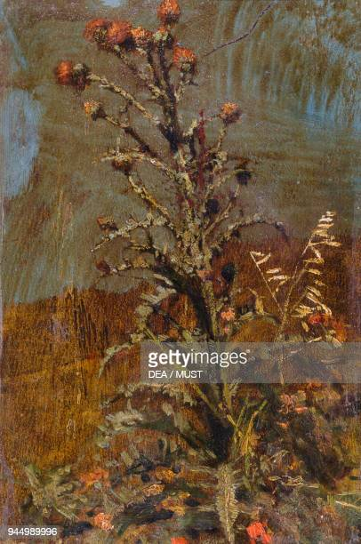 Thistle by Quintilio Michetti oil on paper 18x12 cm Italy 19th century
