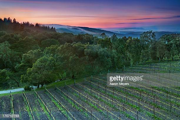 thomas fog-erty - napa valley stock pictures, royalty-free photos & images