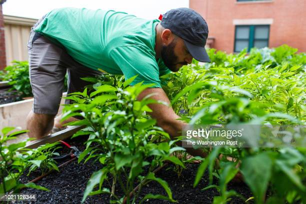 Thomas Schneider the founder and executive director of Rooftop Roots in one of his organizations supported gardens in a building with mixeduse...