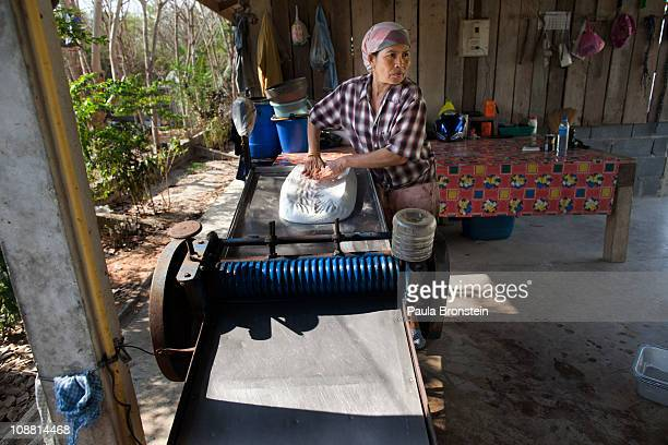 Thongshin Klaharn 49 feeds the slabs of rubber through a press to flatten it for drying at the rubber workshop on February 3 2011 in Rayong Thailand...