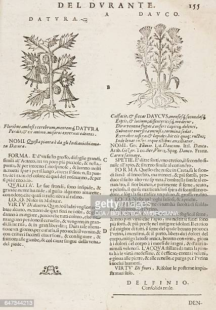 Thorn apple and Wild carrot page from the Herbario Nuovo by Castore Durante engravings by Leonardo Norsini Parasole and Isabella Parasole edition of...