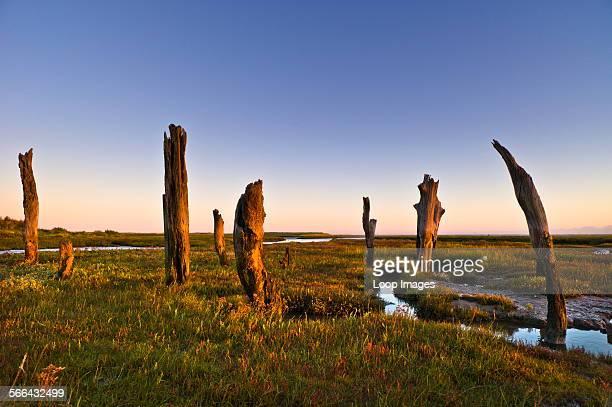 Thornham stumps on the North Norfolk coast at first light