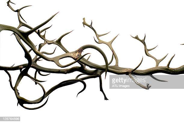 thorns - sharp stock pictures, royalty-free photos & images