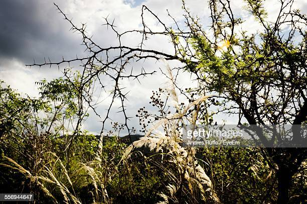 thorny plant on grassy field against sky - andres ruffo stock-fotos und bilder