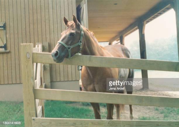 thoroughbred horse barn, friendly horse at fence - um animal - fotografias e filmes do acervo