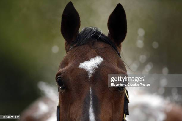 a thoroughbred race horse - racehorse stock pictures, royalty-free photos & images