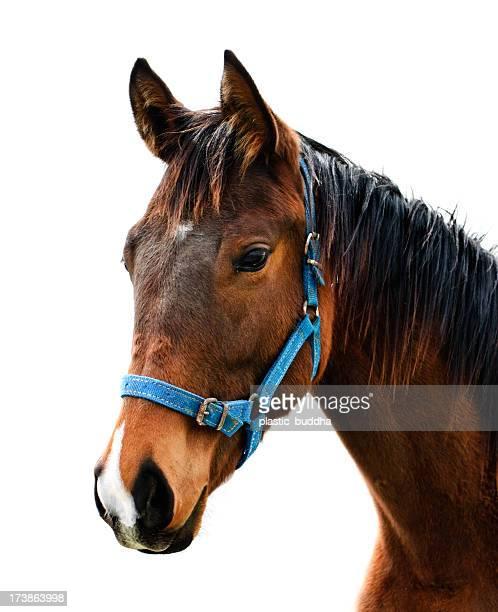thoroughbred race horse ポートレート