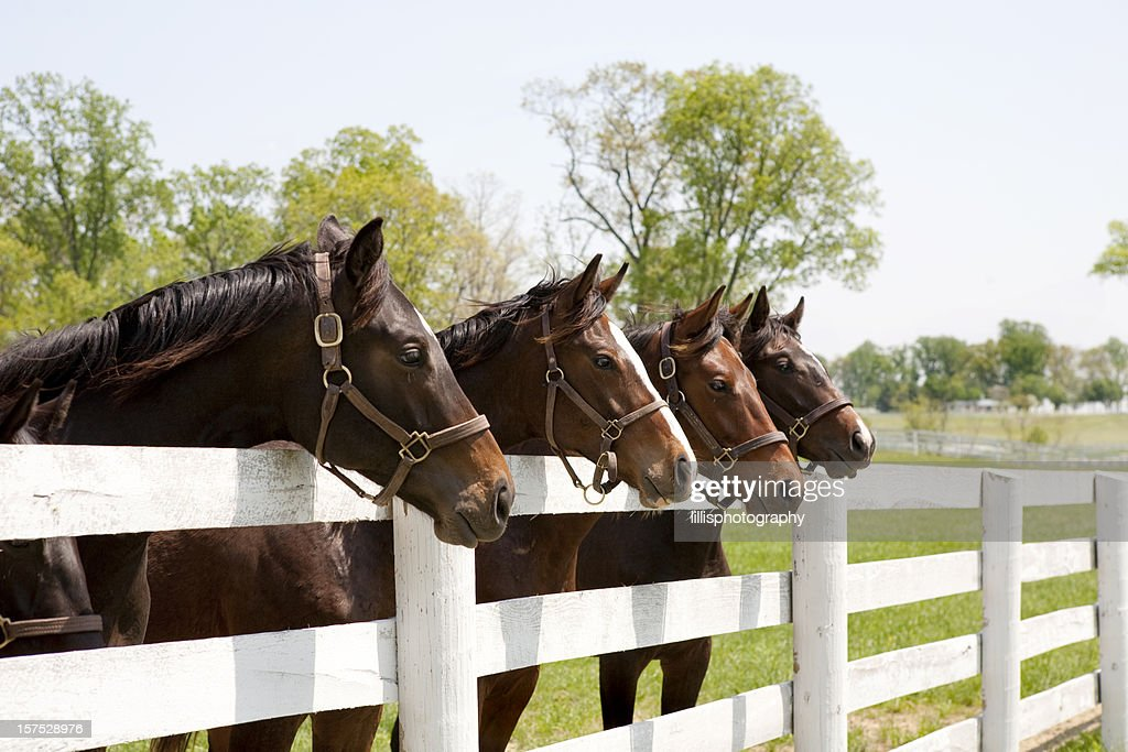 Thoroughbred 競走馬 : ストックフォト