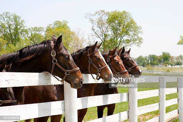 thoroughbred racehorses - horse stock pictures, royalty-free photos & images