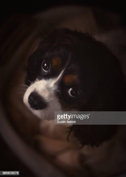 those puppy eyes - dustin abbott - fotografias e filmes do acervo