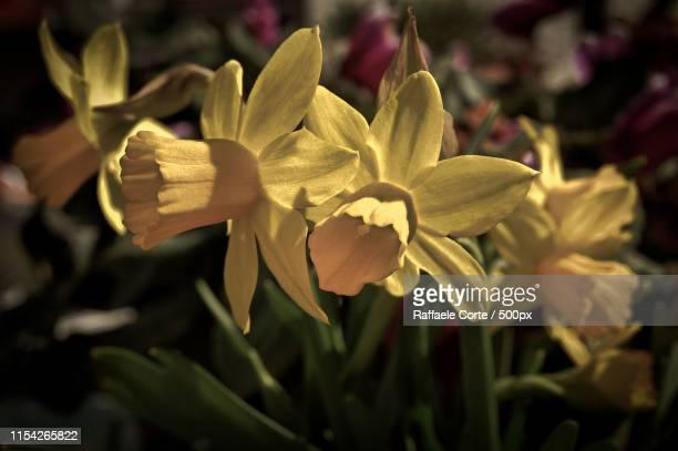 thoughts in yellow - raffaele corte foto e immagini stock